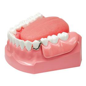 口腔ケア指導用模型